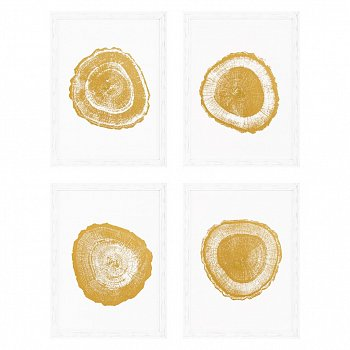 Постер Gold Foil: Tree Rings (4 шт.) 110875